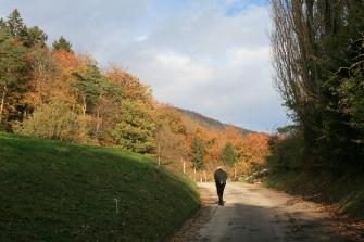 2012-11-01 16.13.26.jpg